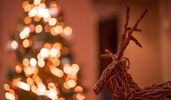 Christmas is such a special time at The Mulberry Tree Attleborough image